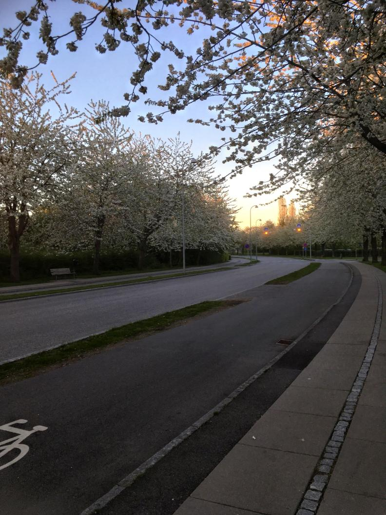 Blossoming Trees in Copehagen