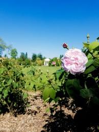 Versaille Gardens